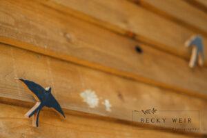 Becky Weir Photography-26